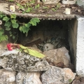 20191107-Friedhof-Tres-Reyes-03